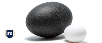 черное и белое яйцо гл