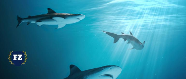 акулы конкуренция гл