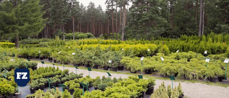 питомник растений зеленый гл
