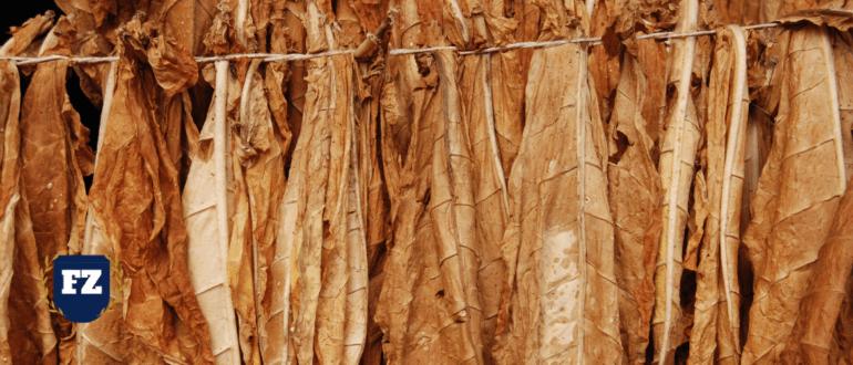 табачные листья гл