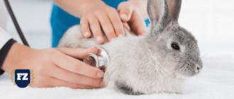вет клиника кролик гл