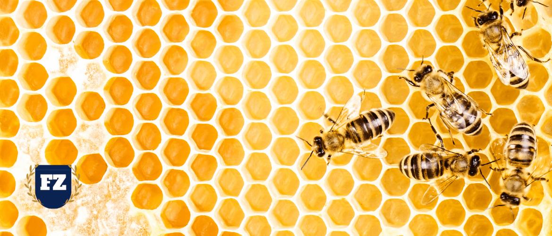 соты пчелы мед гл