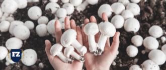 грибы бизнес план гл